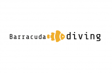 Barracuda-diving
